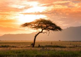 africa-exotico